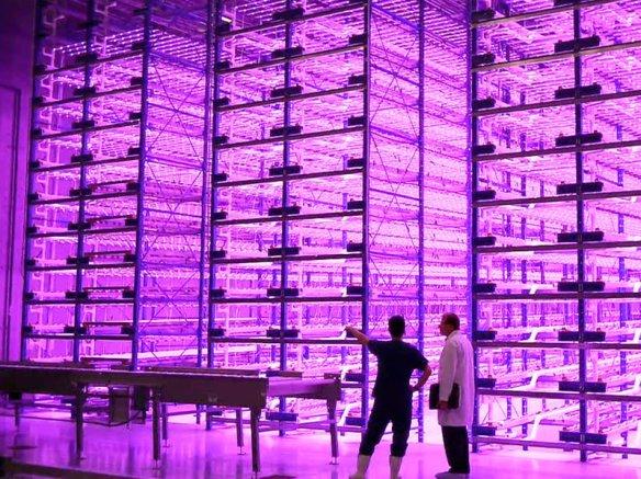 Caliber Biotherapeutics