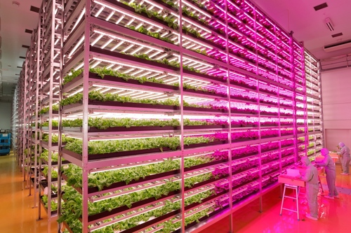 Vertical Farm in Japan